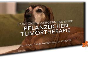 Forschungsergebnisse einer pflanzlichen Tumortherapie und Chlordioxid